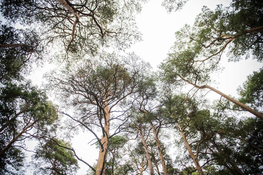 Kallahdenniemen metsä